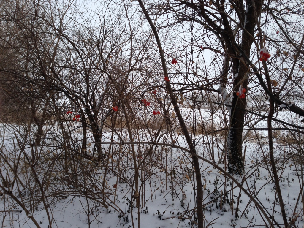 Red Berries in Winte