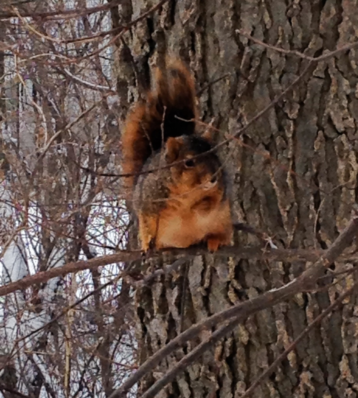 Squirrel Sighting 1001